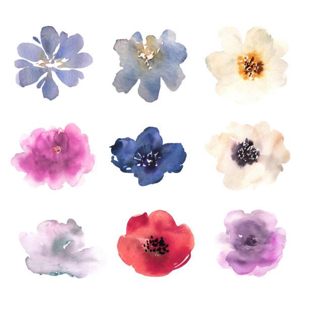 bildbanksillustrationer, clip art samt tecknat material och ikoner med akvarell blommor handritade färgglada vackra blommiga set med rosa röd blå blomma växt. vektor - måla tavla