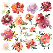 Watercolor flowers hand drawn colorful beautiful floral set with yellow pink red blossom plant for cards prints and invitation. Vector illustration