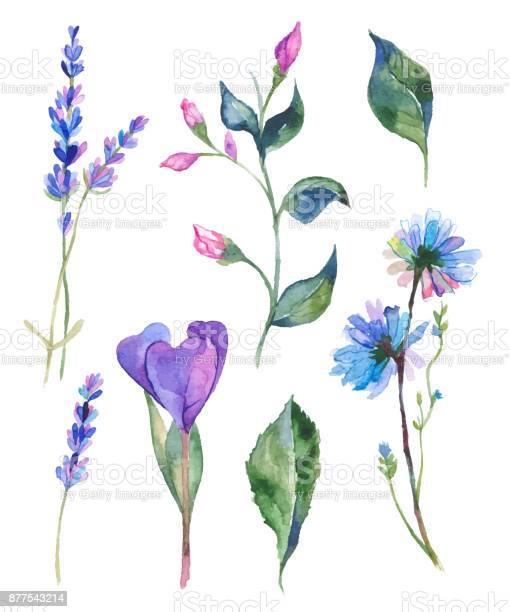 Watercolor flowers illustration vector id877543214?b=1&k=6&m=877543214&s=612x612&h=da8p8i59czifflyc6pryjoec124wy4nyftwzdyomuwm=