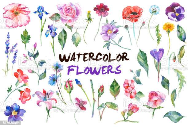 Watercolor flowers illustration vector id877635854?b=1&k=6&m=877635854&s=612x612&h=xz0hyn4zxw xrm4v6dnttml6cpnl8oluidyt5ghgqhe=
