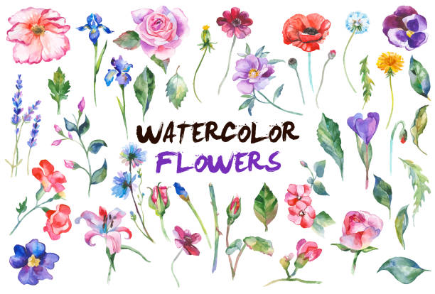 Watercolor flowers illustration Watercolor painted collection of flowers. Hand drawn flower design elements isolated on white background. flower head stock illustrations