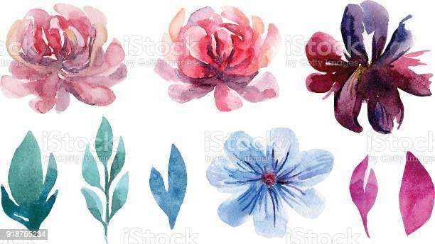 Watercolor flowers vector clip art set vector id918755234?b=1&k=6&m=918755234&s=612x612&h=jr9vpxsbkoyah9lfi9tel5n7h7ofqgxaortcioil5cg=