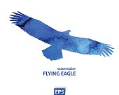 Watercolor template of flying blue big eagle