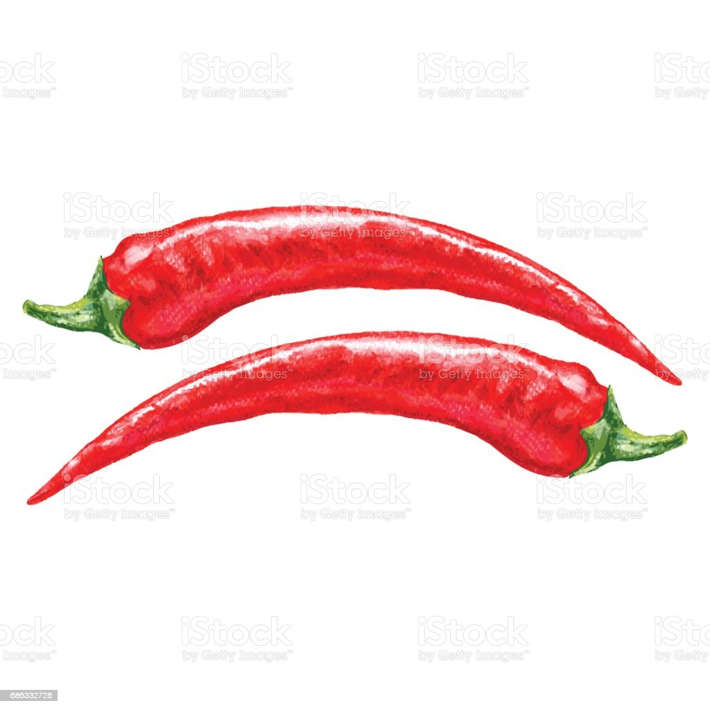 Watercolor fresh red chili pepper isolated on white background, vector illustration, cooking ingredients, condiment, Hand drawn spicy for design menu, packaging ketchup, sauce, natural product vector art illustration