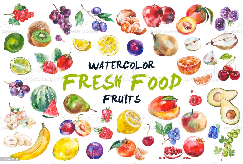 Watercolor fruits isolated on white vector art illustration