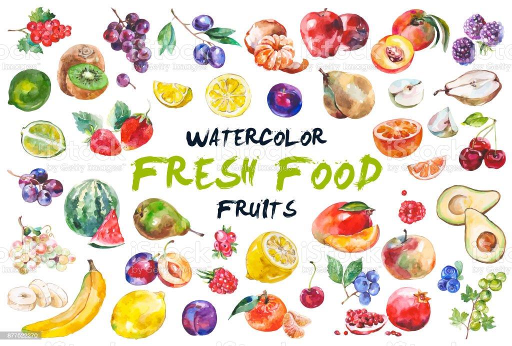 Acuarela frutas aislados en blanco - ilustración de arte vectorial