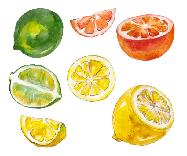 Watercolor fruits isolated on white Watercolor painted collection of fruits. Hand drawn fresh food design elements isolated on white background. citrus fruit stock illustrations