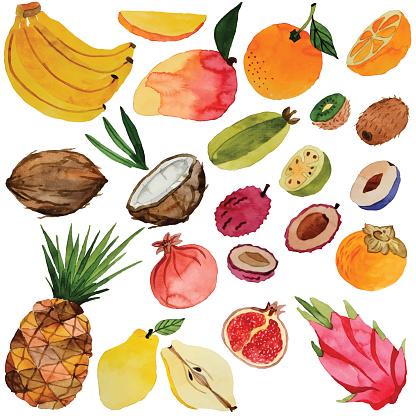 watercolor fruits, vector