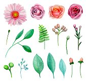 Watercolor garden flowers vector . Floral clip art elements isolated