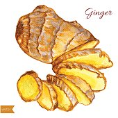 Watercolor ginger root. Hand draw ginger illustration. Spices vector object isolated on white background. Kitchen herbs and spices. Design food elements. Series of food and ingredients for cooking