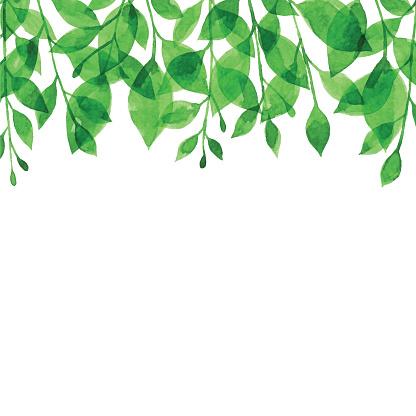 Watercolor Green Branch Bacgkround