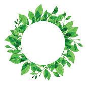 Vector illustration of Green Plants.