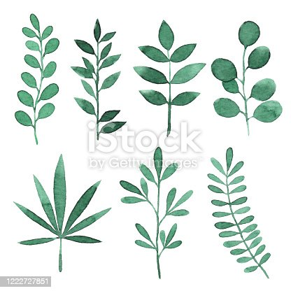 Vector illustration of green leaves.