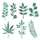 Vector illustration of green leaves.