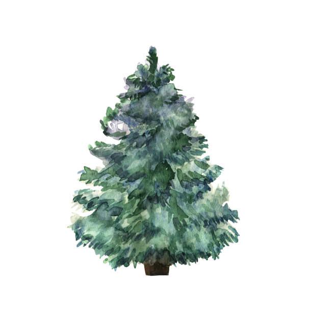 bildbanksillustrationer, clip art samt tecknat material och ikoner med akvarell grön julgran på vit bakgrund. isolerade hand dras anläggning för din design. vektor - christmas tree
