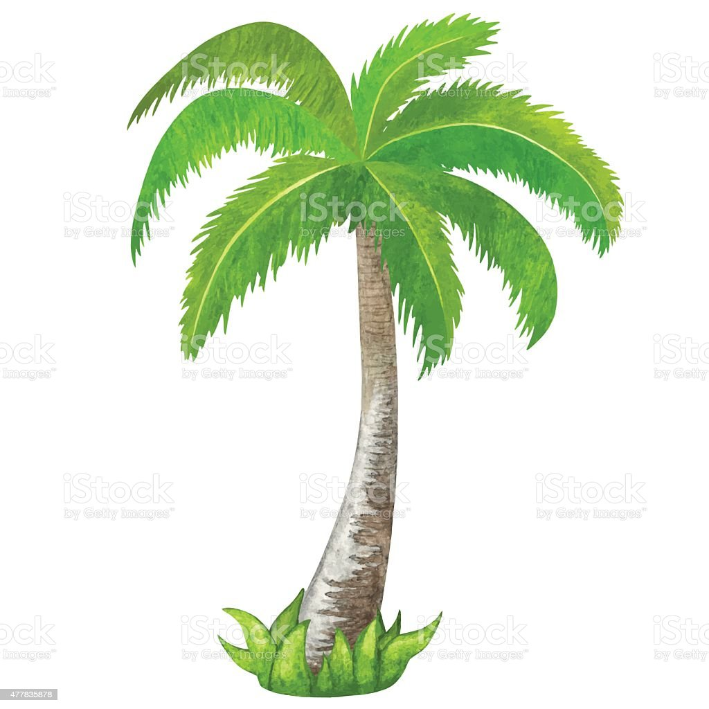 Completely new Watercolor Green Coconut Palm Tree Stock Vector Art & More Images  CG82