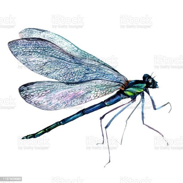 Watercolor green dragonfly vector id1137609985?b=1&k=6&m=1137609985&s=612x612&h=ws 7xmyr0nfm3ug5sotyfcvcxkhqtxbmccdhzfobvqk=