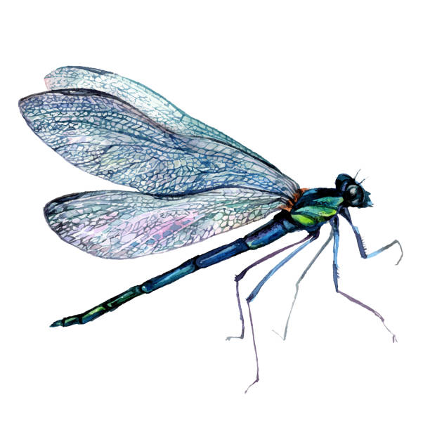 Watercolor Green Dragonfly vector art illustration