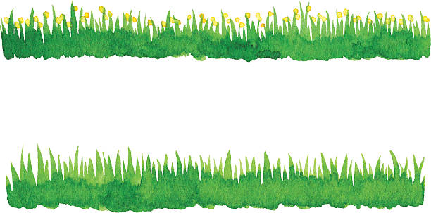 Watercolor Green Grass vector art illustration
