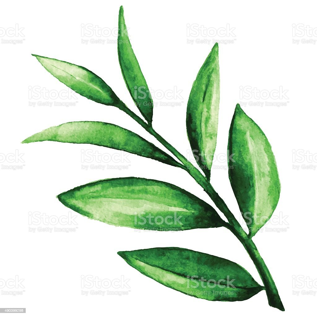 Watercolor green leaves vector art illustration