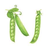 Vector illustration of Green Pea.