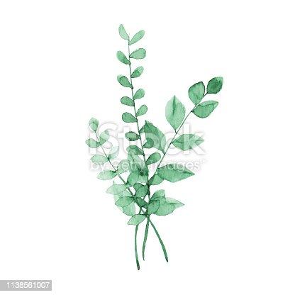 istock Watercolor Green Plants 1138561007