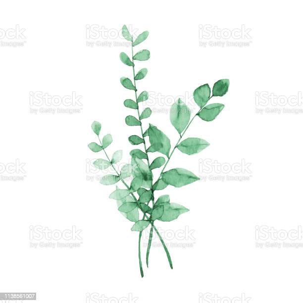 Watercolor green plants vector id1138561007?b=1&k=6&m=1138561007&s=612x612&h=ldgklj0p0vspqxb  buqdp6wt0ige48x0wqfzs3cgfs=