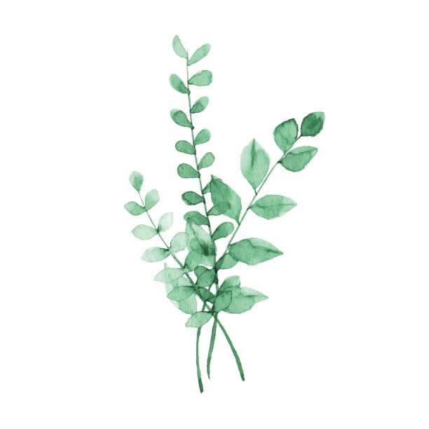 Watercolor Green Plants Vector illustration of green plants. lush foliage stock illustrations