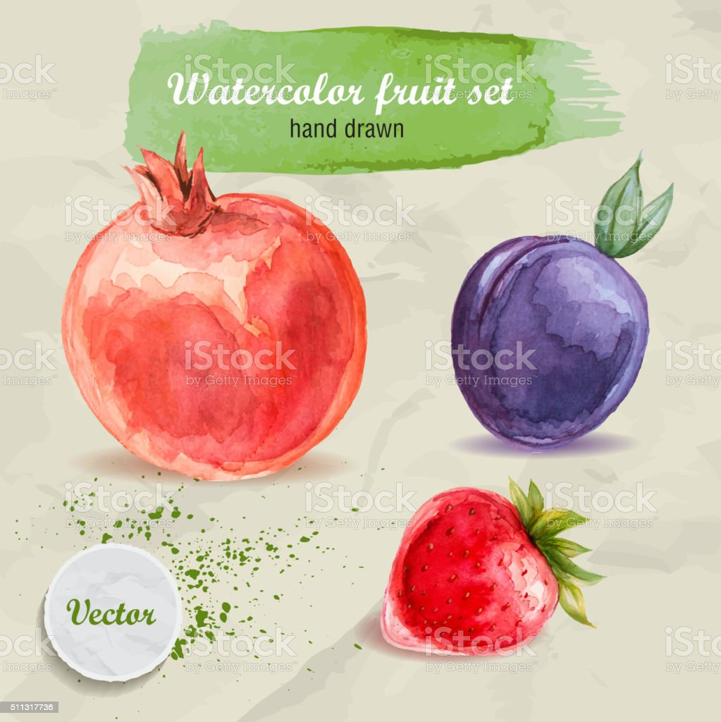 Watercolor hand drawn fruit set. Red pomegranate, plum and strawberry. vector art illustration