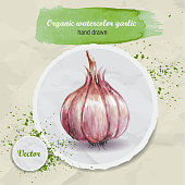 Watercolor hand drawn garlic