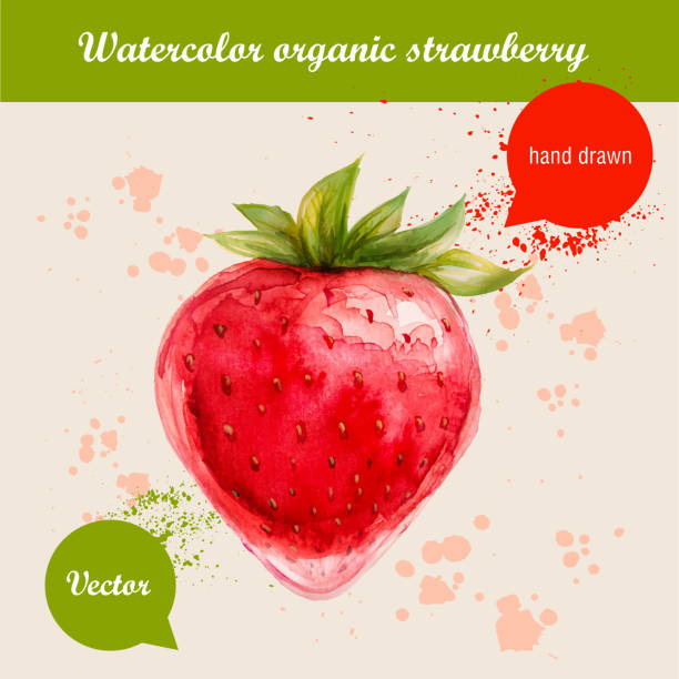 Watercolor hand drawn red strawberry with watercolor drops vector art illustration