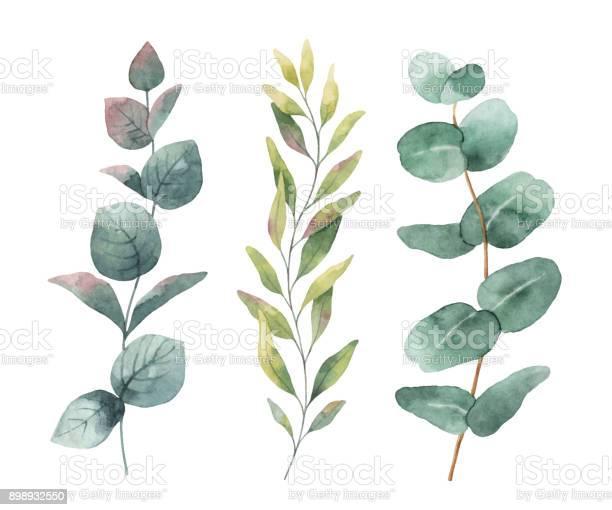 Watercolor hand painted vector set with eucalyptus leaves and vector id898932550?b=1&k=6&m=898932550&s=612x612&h=ae 6gdn08xl4gki7b3njvlzxczm18u09pggwjjnq1tc=