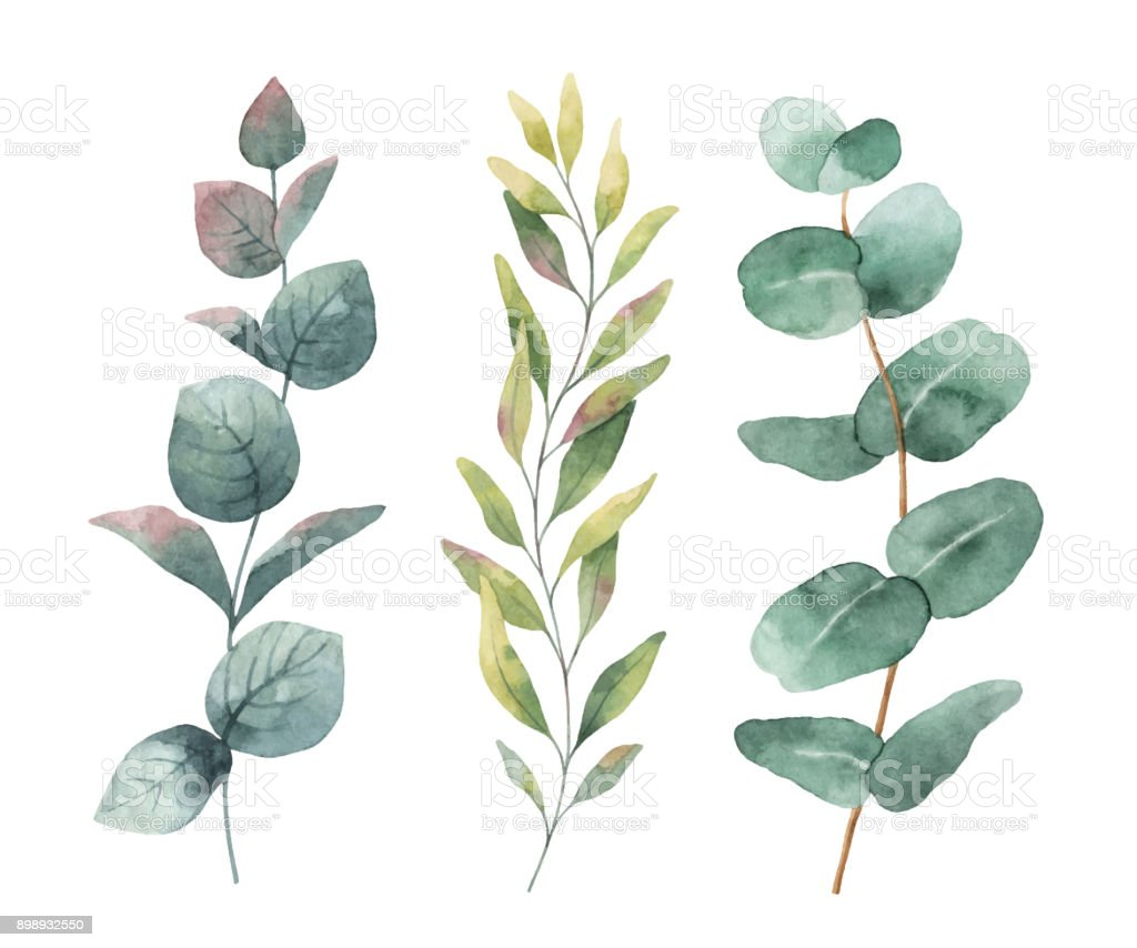 Watercolor hand painted vector set with eucalyptus leaves and branches. vector art illustration