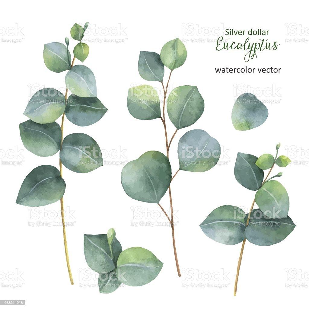eukalyptus pflanze kaufen interesting perfect best knstliche pflanzen eukalyptus bltter grn. Black Bedroom Furniture Sets. Home Design Ideas