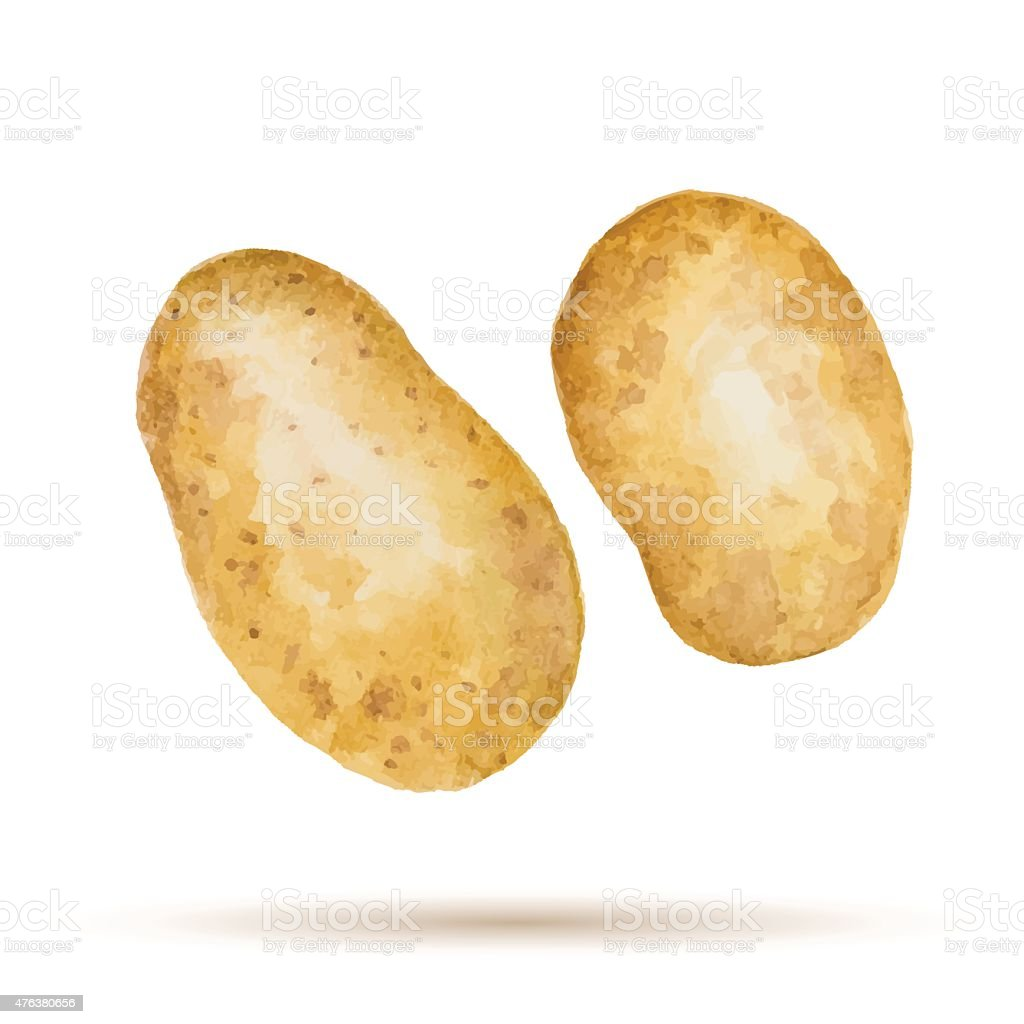 Watercolor handmade potato vector art illustration