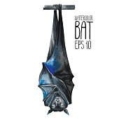 Watercolor sleeping and hanging upside down bat isolated on white background