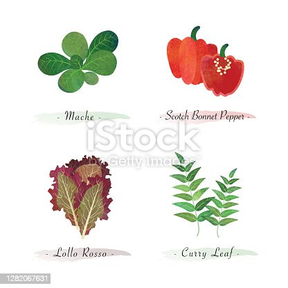 istock Watercolor healthy nature organic plant vegetable food ingredient mache scotch bonnet pepper lollo rosso curry leaf 1282067631