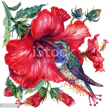 Watercolor Hibiscus and Hummingbird Composition