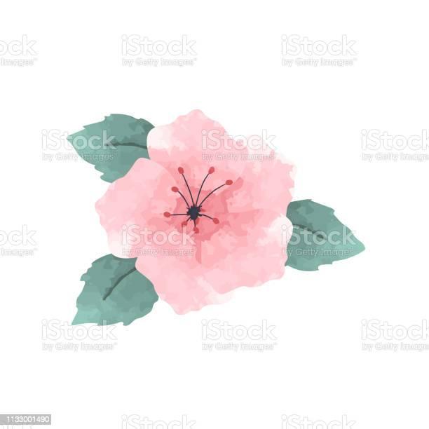 Watercolor hibiscus flower in pink vector id1133001490?b=1&k=6&m=1133001490&s=612x612&h=yy5g6usmt3efetswy6q12x0ouzw8jnzmi67r7oeebmu=