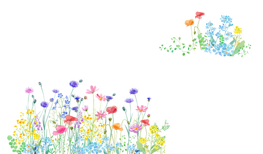 A watercolor illustration of a spring field where various flowers are in full bloom. Two-corner decorative frame design.Watercolor trace vector. The layout of each plant can be changed.