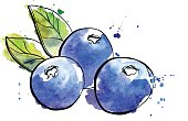 Vector illustration of super food Blueberry. Organic healthy dietary supplement. Black outlines and bright watercolor stains, splashes and drips.