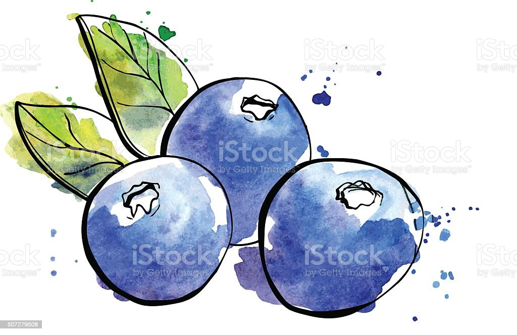 Watercolor illustration of blueberries vector art illustration