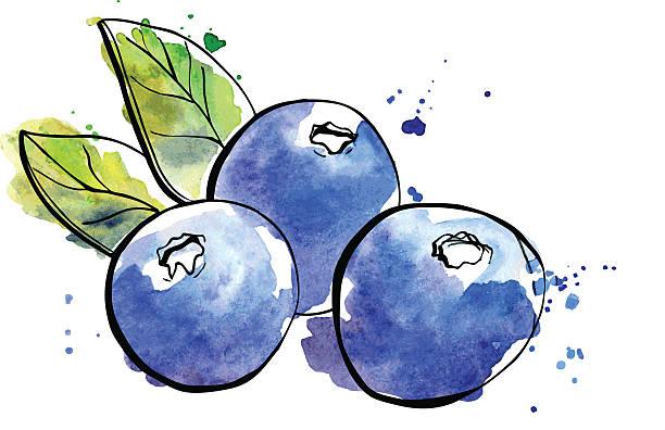 illustrazioni stock, clip art, cartoni animati e icone di tendenza di acquerello illustrazione di mirtilli - mirtilli