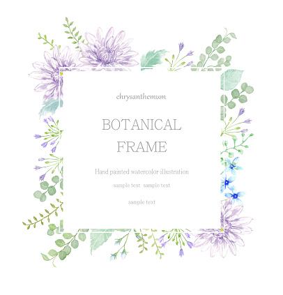 Watercolor illustration  of chrysanthemum frame.