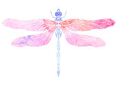 Watercolor illustration of dragonfly with boho pattern.