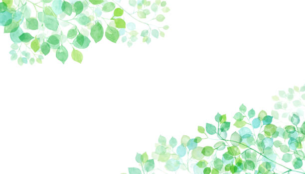 illustrazioni stock, clip art, cartoni animati e icone di tendenza di watercolor illustration of sunbeams two corner decoration frame trace vector (only layout change between two foliage groups is possible) - forest bathing