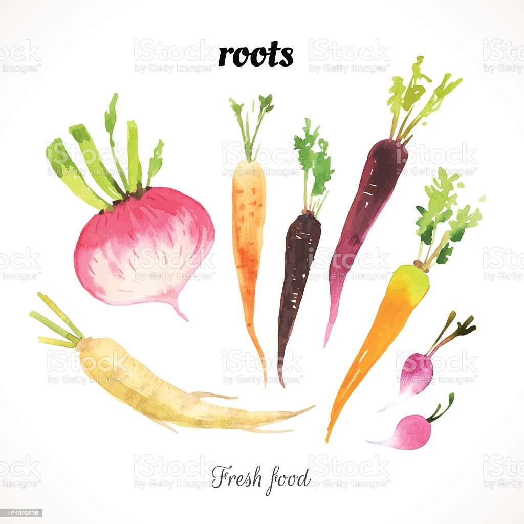 Watercolor illustration of vegetables of a painting technique. vector art illustration