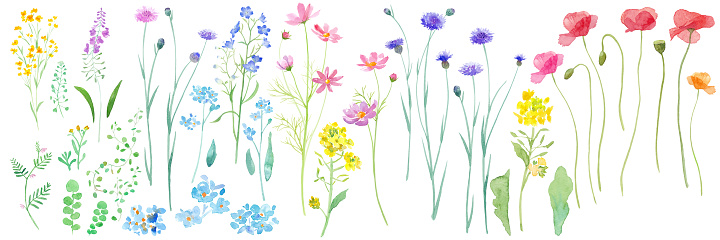 Watercolor illustrations of various flowers blooming in the spring field. Watercolor trace vector.