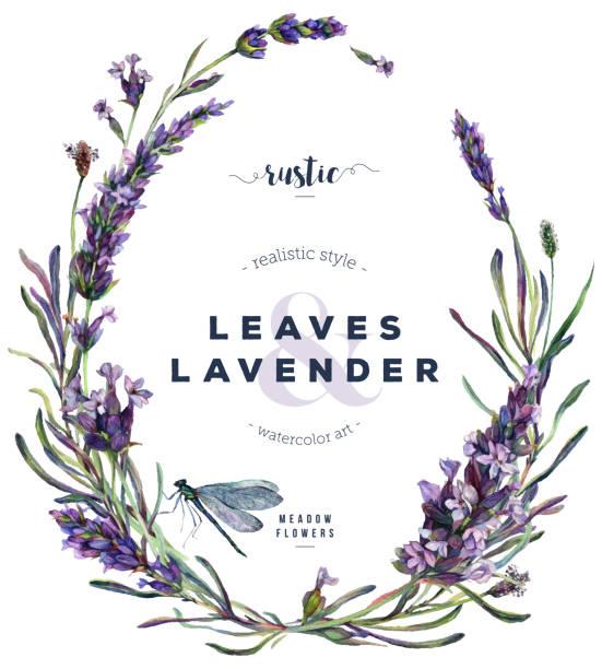 illustrazioni stock, clip art, cartoni animati e icone di tendenza di watercolor lavender and dragonfly floral wreath - colore lavanda