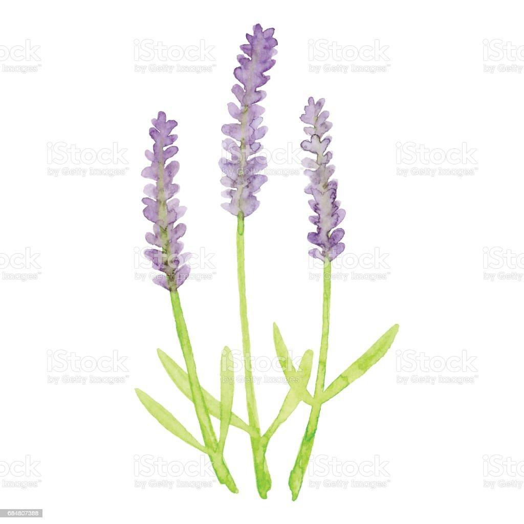 royalty free lavender clip art vector images illustrations istock rh istockphoto com lavender clipart images lavender clipart images